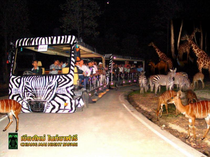 Chiang Mai Night Safari.