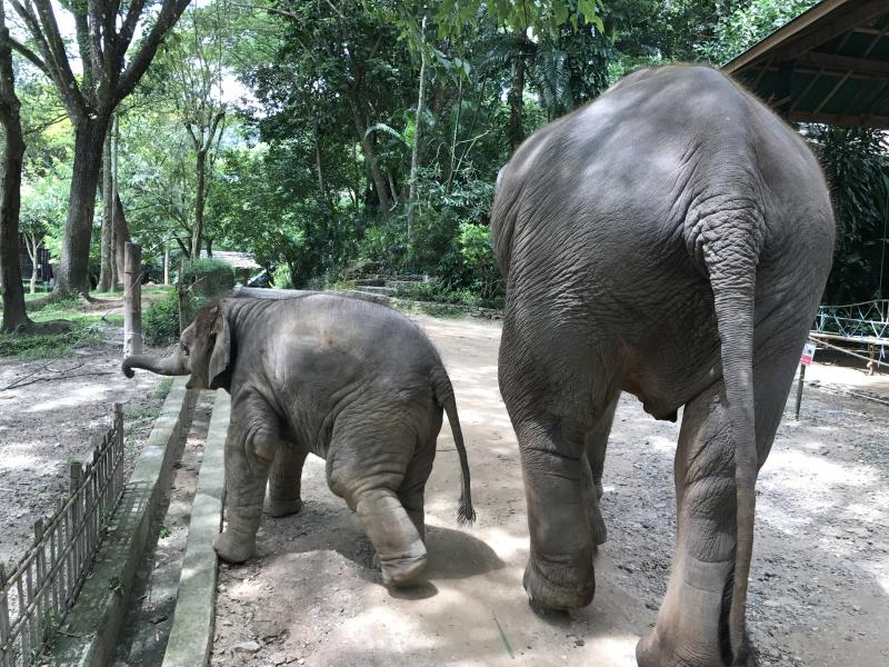 1 Day Elephant + Doi Suthep + Tiger Kingdom.